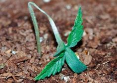 Great info on protecting indoor seedlings from pests