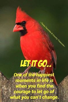 Quotes Sayings and Affirmations Cardinal! Great Quotes, Quotes To Live By, Me Quotes, Motivational Quotes, Funny Quotes, Inspirational Quotes, Positive Thoughts, Positive Quotes, Happy Moments
