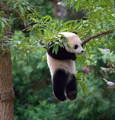 Panda by MAshrafulalam http://ift.tt/1B7uB0c