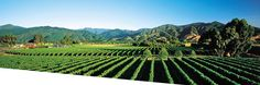 Recognised as the centre of New Zealand's wine industry is Blenheim.  It is the most populous town in the region of Marlborough, in the north east of the South Island of New Zealand.