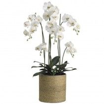 Glenvale Orchids available at http://www.seniorfurnishings.com/