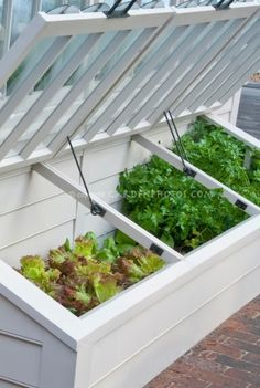 Cold Frame in Vegetable Garden with young lettuce plants by jum jum
