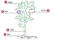 El Maravilloso Mundo de las Plantas