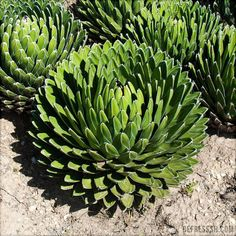 Garden in 'Parque de la Paloma'. Cactus, Benalmadena, Western Theme, Desert Plants, Andalusia, Places To Travel, Nest, Garden Ideas, Landscaping