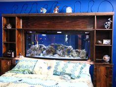 Here's a pic of my Headboard fish tank | REEF2REEF Saltwater and Reef Aquarium Forum