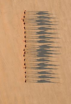 Birds Eye View The shadows of the camels is what makes this such an incredible shot - camel ride by jarrad seng Aerial Photography, Art Photography, Night Photography, Desert Photography, Landscape Photography, Photography Composition, Fotografia Drone, Birds Eye View, Light And Shadow