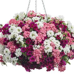 Hanging Flower Baskets : 5 Secrets the Pros Use Yep, you really can have those lush, full, awe inspiring hanging baskets in your own garden with these tips and tricks! Container Flowers, Flower Planters, Container Plants, Container Gardening, Flower Pots, Succulent Containers, Hydroponic Gardening, Plants For Hanging Baskets, Hanging Flowers