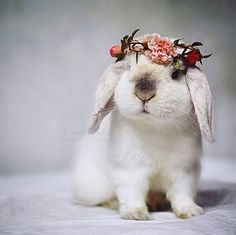 Find images and videos about animals, bunny and rabbit on We Heart It - the app to get lost in what you love. Cute Little Animals, Cute Funny Animals, Cute Dogs, Pet Bunny Rabbits, Pet Rabbit, Cute Baby Bunnies, Funny Bunnies, Beautiful Rabbit, Interesting Animals