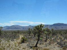 Near Meadview, AZ, along the western edge of the Grand Canyon -  Taken by: Mona Jensen