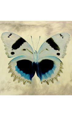 Flaunting Flight Chamois Canvas Painting