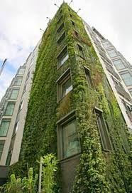 Image result for patrick blanc vertical garden