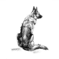 """The Shepherd"" GSD Sketch Print – PaintMyDog | Dog Art | Contemporary Dog Portraits"