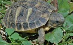Le cure per le tartarughe di terra #tartaruga #terra #cure #alimentazione