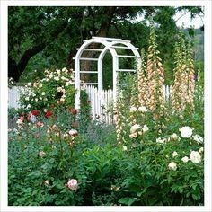 Cottage Garden Northern Cal - roses, foxgloves, arbor