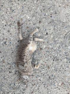 Playful Cat Play, Cats, Animals, Gatos, Animales, Animaux, Animal, Cat, Animais