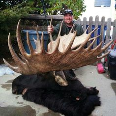 Giant Wyoming Shiras moose Moose Hunting, Bull Moose, Big Game Hunting, Trophy Hunting, Hunting Season, Deer Hunting, Hunting Meme, Hunting Trips, Large Animals
