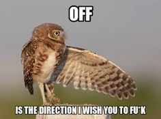 fuck off owl