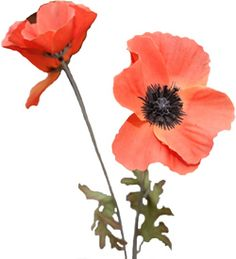 The Flanders fields poppy as a symbol of Remembrance. Flanders Field Poppies, Remembrance Day Poppy, Disabled Veterans, Royal British Legion, Remember The Fallen, Military Tattoos, World War Two, Memorial Day, Fundraising