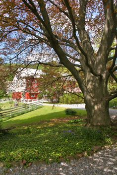 Historic J. Hummer House c.1851 - 100+ year old Copper Beech Tree