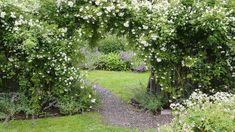 Klätterväxter för alla lägen – stora guiden som hjälper dig att välja!