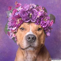 Why I Care About Pit Bulls: A Manifesto of Love, Justice and Blocky-Headed Doggies