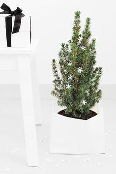 Pienet havupuut sisätiloissa ovat tämän joulun must! Via Bildschœnes | Nordic Christmas