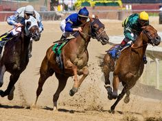 Saratoga race track - another local event is going the Race Track during season, they also have a casino on site and many restaurants. Free Horses, Horses For Sale, Horse Wallpaper, Wallpaper Pictures, Ancient Olympics, Horse Betting, Horse Racing Bet, 1920x1200 Wallpaper, Headboards