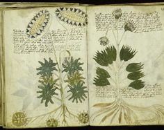 """""""Voynich Manuscript"""" (made between 1402 to Its pages are filled with colorful drawings of strange diagrams, odd events. original author of the manuscript remains unknown. Voynich Manuscript, Illuminated Manuscript, Botanical Illustration, Botanical Prints, Out Of Place Artifacts, Mysteries Of The World, Greatest Mysteries, Unexplained Mysteries, Scrapbooks"""