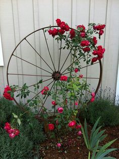 This wagon wheel trellis idea with the red roses is beautiful, giving my dad this idea as well, he would def like this for his beautiful garden...