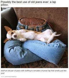 Life Hacks - Doggy Edition - Imgur