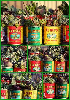 Succulent Gardens in Cans