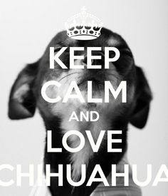Keep Calm/Love Chihuahuas