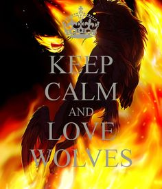For wolf lovers Wolf Pack Quotes, Wolf Qoutes, Lone Wolf Quotes, Animal Spirit Guides, Wolf Spirit Animal, Anime Wolf, Kiara Lion King, Of Wolf And Man, Alpha Wolf