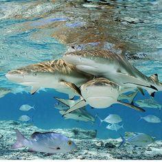 A wonderful underwater world.