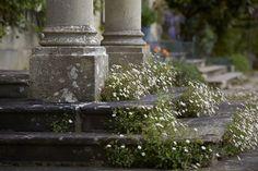 Bayntun Flowers, Wil