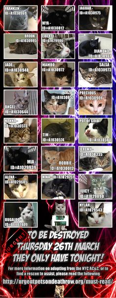 26th. March - IS YOUR PET MISSING ? TAKE A LOOK ... all these 23 cats are scheduled to be killed tomorrow at noon / FOSTERING is FREE; please , HELP