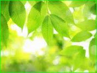BioinformaticianNRJ: Photosynthesis MCQ part 2