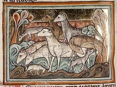 Medieval Bestiary : Sheep Gallery