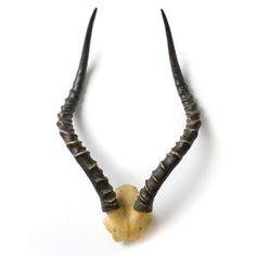 Impala Horns - Wall Decor