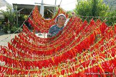 a vendedora de pimentas em Sirinci