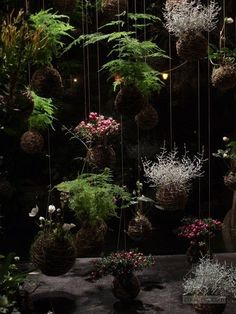 Image from http://chateaufloralandhome.com/wp-content/uploads/2013/12/kokedama.jpg.