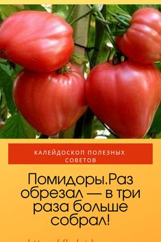 Growing Plants, Gardening Tips, Landscape, Vegetables, Agriculture, Tomatoes, Russian Recipes, Garten, Scenery