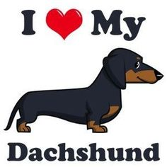 I Love my Dachshund dogs. Dachshund Breed, Dapple Dachshund, Dachshund Art, Daschund, Animals And Pets, Cute Animals, Clever Dog, Most Popular Dog Breeds, Weenie Dogs