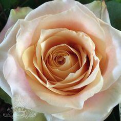 Lawrence Goldman 1936-2016 Pretty Roses, Flowers, Plants, Plant, Royal Icing Flowers, Flower, Florals, Floral, Planets