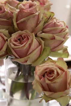nice colour of roses...