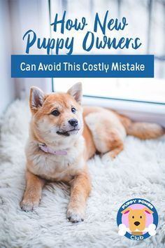 How New Puppy Owners Can Avoid This Costly Mistake If you have a new puppy, read this. Here's how to avoid the main mistake most new puppy owners make. Puppy Obedience Training, Puppy Training Tips, Training Your Dog, Potty Training, Dogs Tumblr, Husky, Dog Minding, Puppy Biting, Dog Training Techniques