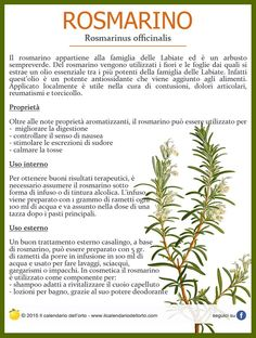 Rosmarino officinalis