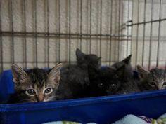KC Kittens (6) -- saved!