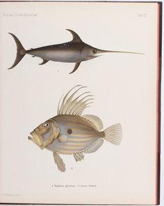 Wright, Skandinaviens Fiskar. Fische aus Skandinavien, 1892
