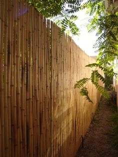 brightfields bamboo fencing diy / this gives a nice background texture ---- Bamboo Garden, Bamboo Fence, What Is Urban, Bamboo Architecture, Vegetable Garden For Beginners, Bamboo Wall, Urban Homesteading, Landscape Plans, Felder